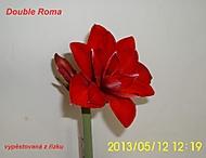 výška stvolu 15 cm, květ 14 cm (Karen Válková)