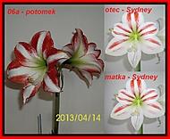 http://galerie.Abecedazahrady.dama.cz/data/500/thumbs/06a-2013-00_v_ka_stvolu_23cm_pr_m_r_kv_tu_14cm.jpg