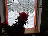 100_3171 (Amira)