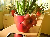 Sazeničku jsem dala sousedce,jí kvete a ta moje nic. (Evouš)
