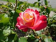 http://galerie.Abecedazahrady.dama.cz/data/500/thumbs/DSCN9342.JPG