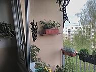 Na okně vlaštovky, v truhlíku kosáci (Neregistrovaný)