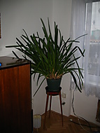 orchidej (Neregistrovaný)