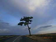 Strom-samotář (Neregistrovaný)