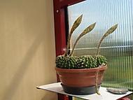 kaktusy (Neregistrovaný)
