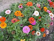 Léto plné barevných květů (Neregistrovaný)