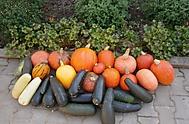 Vzorně pečujeme o zahradu, která nám dělá takovou radost! (Neregistrovaný)