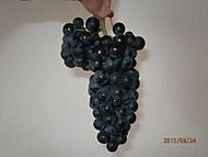 Nastal čas vinobraní... (Neregistrovaný)