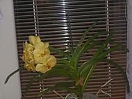 Zahrada_a_d_ti_0161 (květiny)
