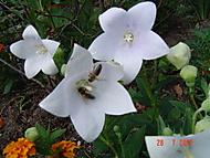 jak včelkám chutná (Neregistrovaný)