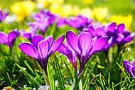 jaro-je-tu (Neregistrovaný)