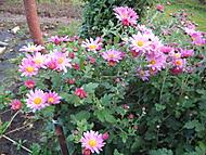 podzimní květy (bouga)