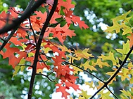 barevný podzim (bomila)