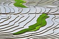 Rýžová pole v oblasti Tu Le Valley ve Vietnamu; foto: Profimedia (AbecedaZahrady.cz)