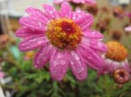 po dešti (dama 55)
