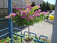 http://galerie.Abecedazahrady.dama.cz/data/510/thumbs/IMG_0023.JPG
