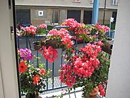balkon 2016 -  pohled ze dveří (bouga)