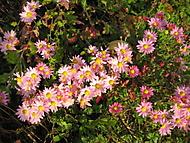 podzimní krása (bouga)