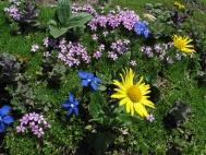 Květiny (Larssen)