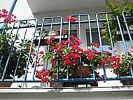 balkon 2017 (bouga)