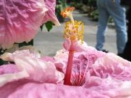 Botanická zahrada ve Washingtonu (Larssen)
