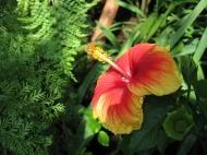 V botanické zahradě v Lednici (2) (Larssen)