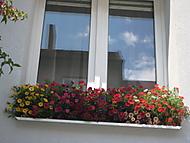 okno (bouga)