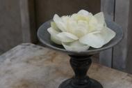 Lotosový květ v královské zahradě kousek nad Bangkokem (Larssen)