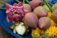 Obětní lotosové květy (Thajsko) (Larssen)