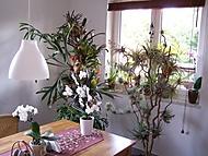 epifity doma (bruk600)