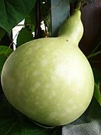 lagen�rie (bomila)