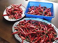chilli ze zahrádky (bouga)