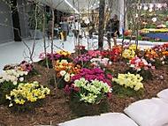 Flora Olomouc (Naďka)