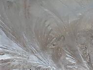 Ledové květy (Naďka)