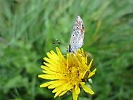 Motýlek (Naďka)