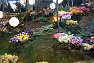 Flora Olomouc (bomila)