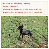 Dráček od Královny Celesty - pražský krysařík (Karen Válková)