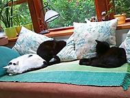 Kočky kam se podíváš (kočičí)