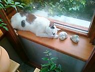 Sarona zmohlo take nedelni odpoledne (kočičí)