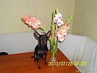 http://galerie.Abecedazahrady.dama.cz/data/515/thumbs/2013-52_Gugl_k.jpg