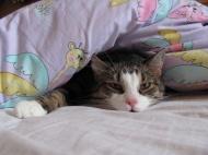 kocour Péťa v posteli (dama 55)
