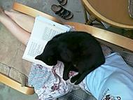 jak Sarlotu zmohlo cteni - nedelni siesta (kočičí)