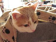 Henry -  malý domácí drak zlobák (dama 55)