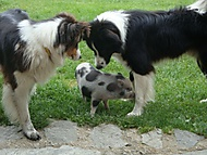 3 kamarádi-Šumava (bomila)