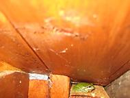 rosnička sedí na budce a skřehotá (bouga)