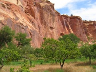 Broskvový háj v Utahu (Larssen)