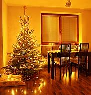 Vánoční stromeček - smrk pichlavý (JardaZd)
