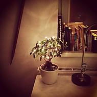 vianočný bonsai (Neregistrovaný)
