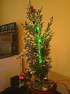Muj miniaturní NERD strom (Neregistrovaný)